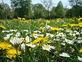 Alwin-Mittasch-Park Ludwigshafen im Frühling.JPG