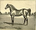 American horses and horse breeding - a complete history of the horse from the remotest period in his history to date. The horseman's encyclopedia and standard authority on horses, embracing breeds, (14598244430).jpg