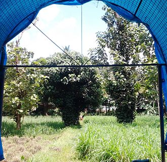 Kanhangad - Anandashram has a green gazebo where you are surrounded by birds and butterflies all the time