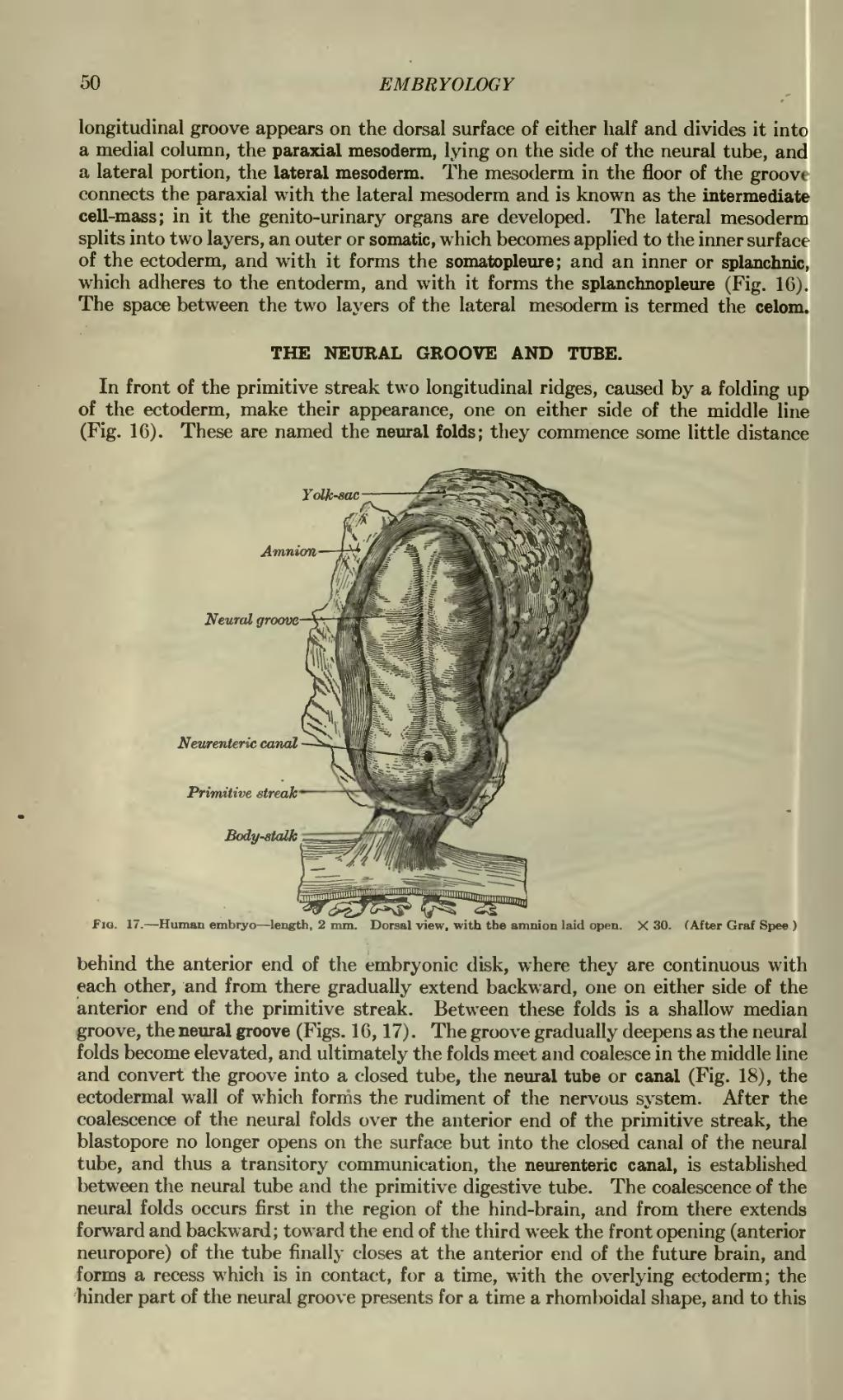Page:Anatomy of the Human Body(Lewis-1918).djvu/54 - Wikisource, the ...