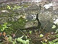 Ancient Stoup in wall of Llanllawer Church - geograph.org.uk - 946965.jpg
