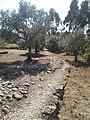 Ancient road in Alqueidão da Serra.jpg