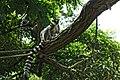 Animals Zoo Duisburg (167337083).jpeg