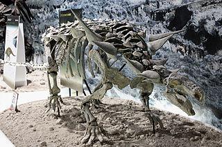 <i>Animantarx</i> genus of reptiles (fossil)