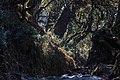 Annapurna Conservation Area - panoramio (4).jpg