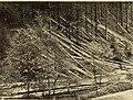 Annual report (1901) (14563493449).jpg