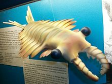 AnomalocarisDinoMcanb.jpg