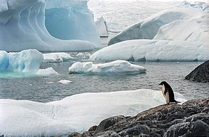 Habitat - Few creatures make the ice shelves of Antarctica their habitat.