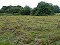 Anthills on Mitcham Common - geograph.org.uk - 2485945.jpg