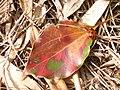 Apanese nature leaf and ladybird.jpg