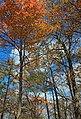 Appalachian Trail- Totts Gap to Mount Minsi (5) (10355517116).jpg