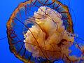 Aquarium of the Smokies 2009 (2).jpg