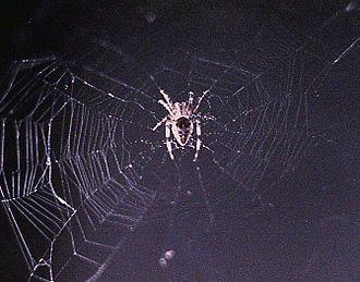 Animals in space - First spider web built in space