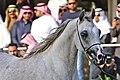 Arabian Horse (244439621).jpeg