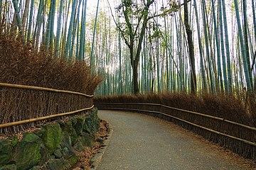 Bamboo - Wikipedia