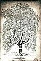 Arbor Geneologico Chouteau (Chouteau Family Tree), 1900.jpg