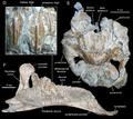 Arenysaurus.png