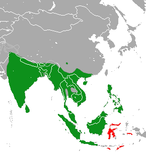 Asian Palm Civet area