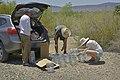 Assembling snake traps (27564086845).jpg