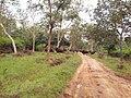At bandipur -2.jpg
