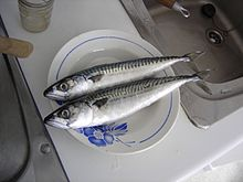 Atlantic mackerel 001.jpg