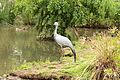 Austin Roberts Bird Sanctuary-055.jpg