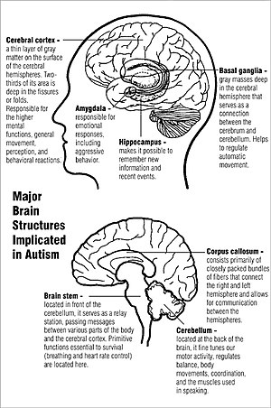 Self-awareness - Major brain structures implicated in autism.