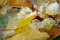 Autumn in iran پاییز در ایران- استان قم 11.jpg