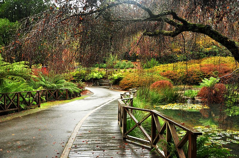 Autumn in the Dandenong Ranges.jpg