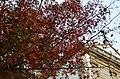 Autumn leaves (6326645203).jpg