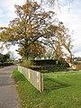 Autumnal oak by a pond - geograph.org.uk - 1565712.jpg