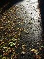 Autumnleavesasphalt.JPG