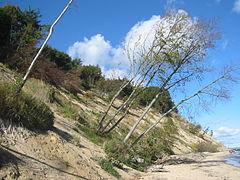 Bäume wachsen weiter.JPG