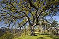 BLM Winter Bucket List -14- Cache Creek Natural Area, California, for Eagle Hikes (16218246352).jpg