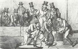 Badger baiting was outlawed in England by the Cruelty to Animals Act 1835. Painting by Henry Thomas Alken, 1824