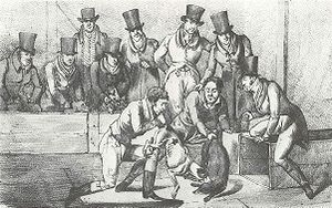 Title: Badger Baiting, London, circa 1824.