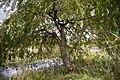 Bald Eagle State Park Tree.jpg