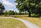 Balloërveld, natuurgebied in Drenthe 027.jpg