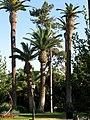 Barcelona Parc Ciutadella 6 (8252491788).jpg