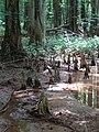 Battle Creek Cypress Swamp 34.jpg