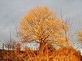 Baum - panoramio (9).jpg