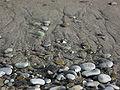 Beach stones and sand.JPG