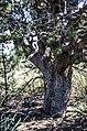 Bear Mountain, Sedona, Arizona - panoramio (34).jpg