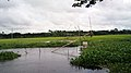 Beauty of Bangladesh.JPG