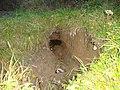 Beaver hole Myczkow A123.jpg