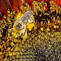 Bee (9335303987).jpg