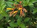 Bee and orange flower 4.jpg