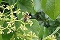 Bees hunting.jpg
