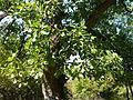 Beglik Tash - surrounding forest - P1020629.JPG