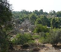 Beit-Guvrin-western-hill-142.jpg